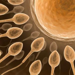 Semen analysis showed no sperm authoritative message